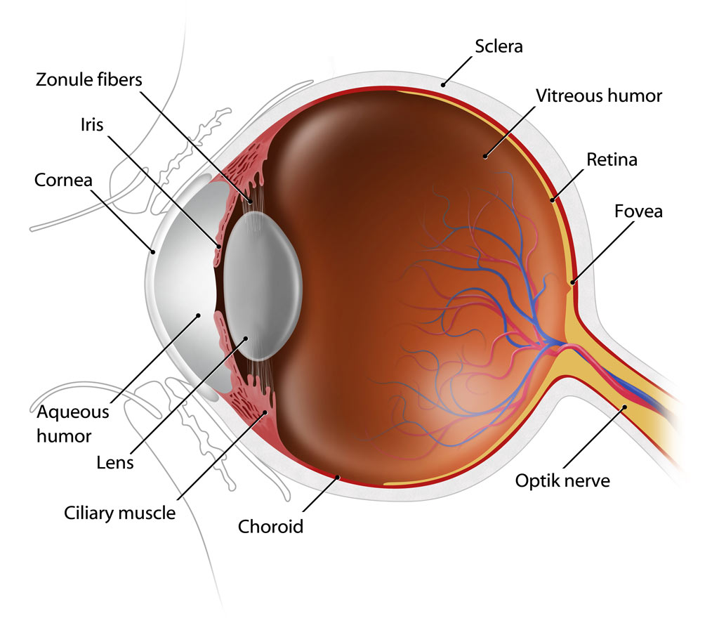 eye-anatomy1