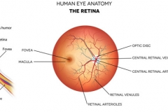 eye-anatomy-retina