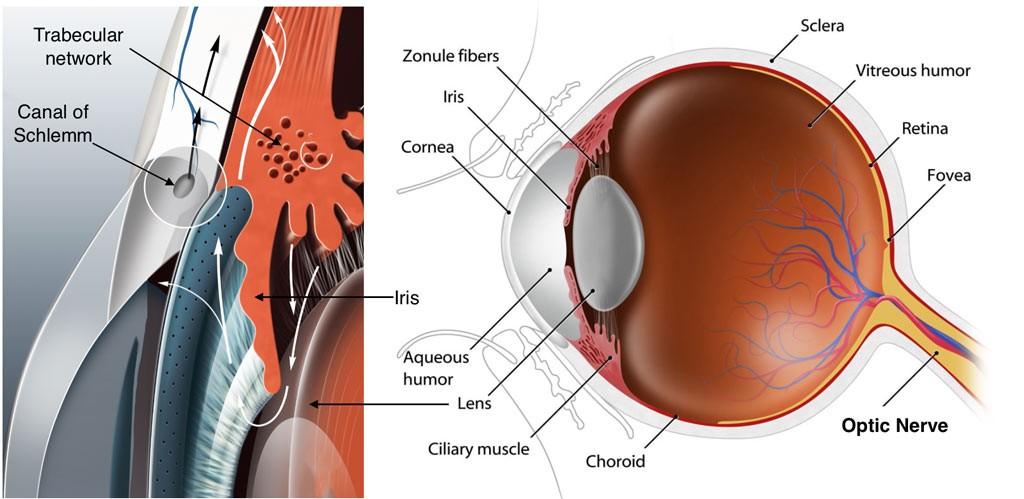 Asociados de glaucoma de Texas