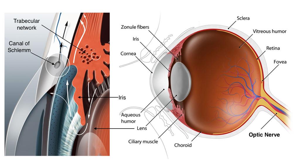 glaucoma tests and diagnosis - glaucoma associates of texas, Cephalic Vein